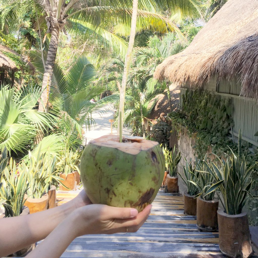 fresh coconuts in Tulum Mexico at Ahau